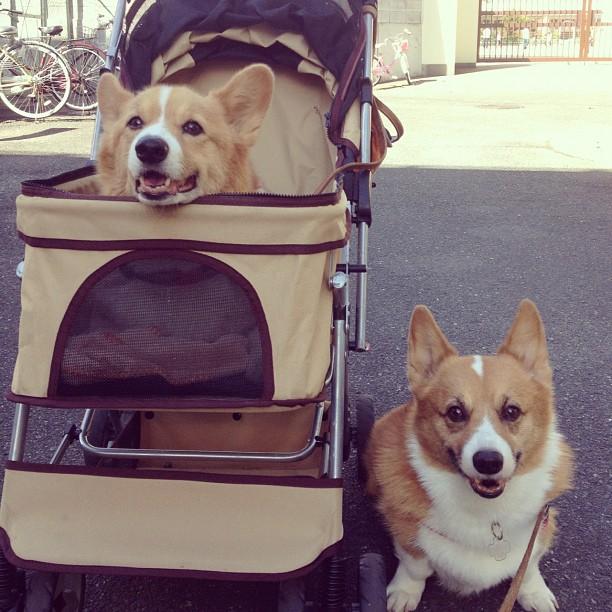遊歩道の終点で、また交代~!これは私も楽でええわ。ディル歩かなくなると重いねん( ̄▽ ̄;)
