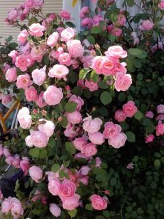 花がいーっぱい