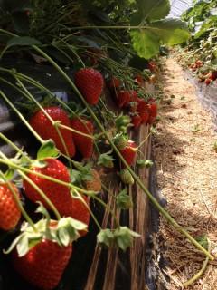 今年は豊作!いっぱい実ってましたよ〜。