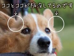 耳と目の間の筋肉がなくなってますよー。