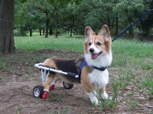 車椅子で自由に走り回るよ!