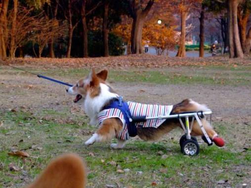 車椅子は慣れっこになったね♪