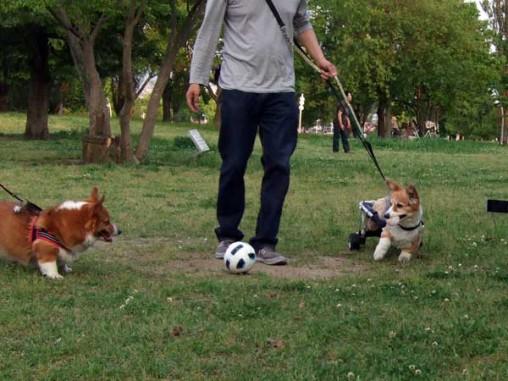 サッカーボールが…!(笑)