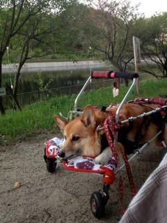 車椅子をいい感じに作ってもらったね。乗り心地よさそう〜♪