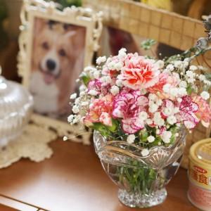 かあちゃんが持ってきてくれたディルへのお花 .:゚+