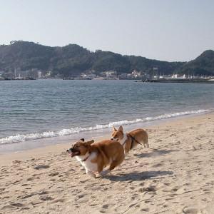 和歌山の片男波で、しずくベビーのみっちょんと爆走!…みっちょんともお空で会えたかな