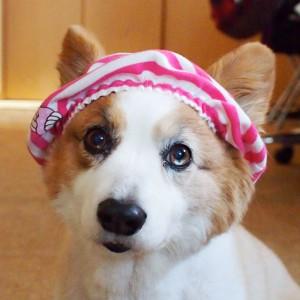 とうちゃんにおパンツ帽子にされてもーた。