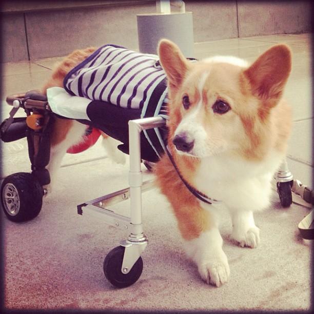 車椅子に前輪つけて、4輪になりますたっ!後はディルのヤル気次第…~_~;